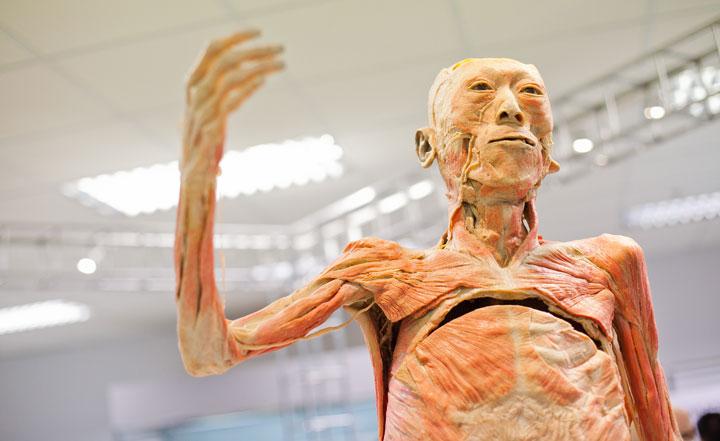 พิพิธภัณฑ์ร่างกายมนุษย์